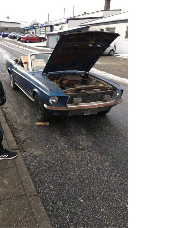Mustang15-01-20211.jpg